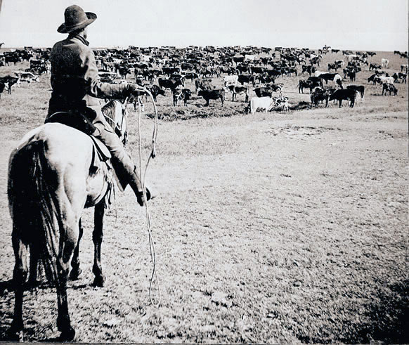 Cattle-Drive-Cowboy-1902_copy